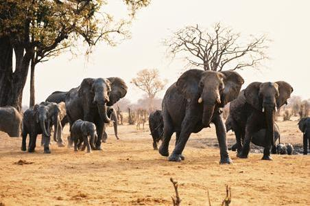Botswana's Impending Wildlife Disaster | Sports Afield
