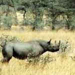 Rhino Conservation Isn't Just About Rhinos