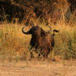 Four Tips from Tanzania
