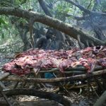 Eating Eden to Extinction