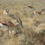 Wildlife Conservation on the Rangelands of Eastern and Southern Africa