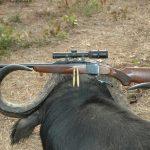 Single-shots on Safari